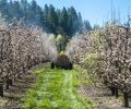 News about Neonicotinoid Pesticides in Europe