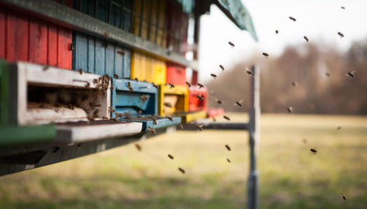 Traditional vs Commercial Beekeeping – What's the Difference?