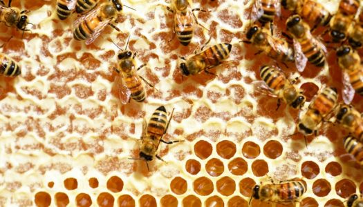 Why Bees Are So Important to Us?